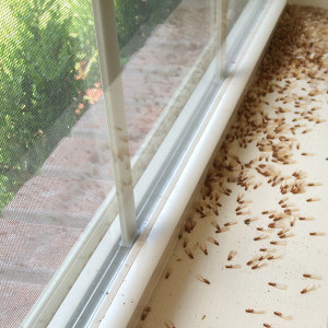 termites window sills control crestview fl