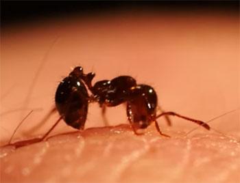 fire ant bites crestview fl